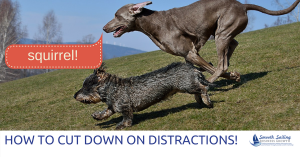 cut down distractions